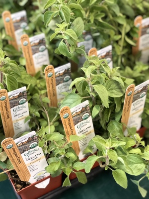 Annual Herb and Heirloom Veggie Sale